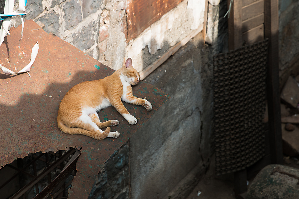 photoblog image Cat Nap