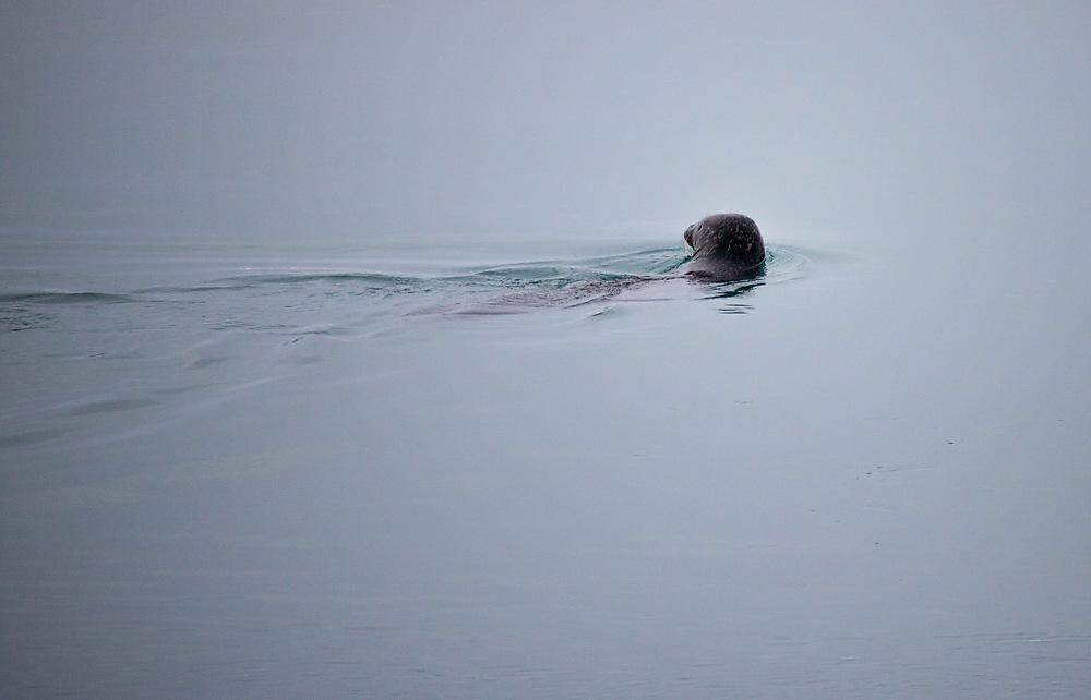 photoblog image Seal