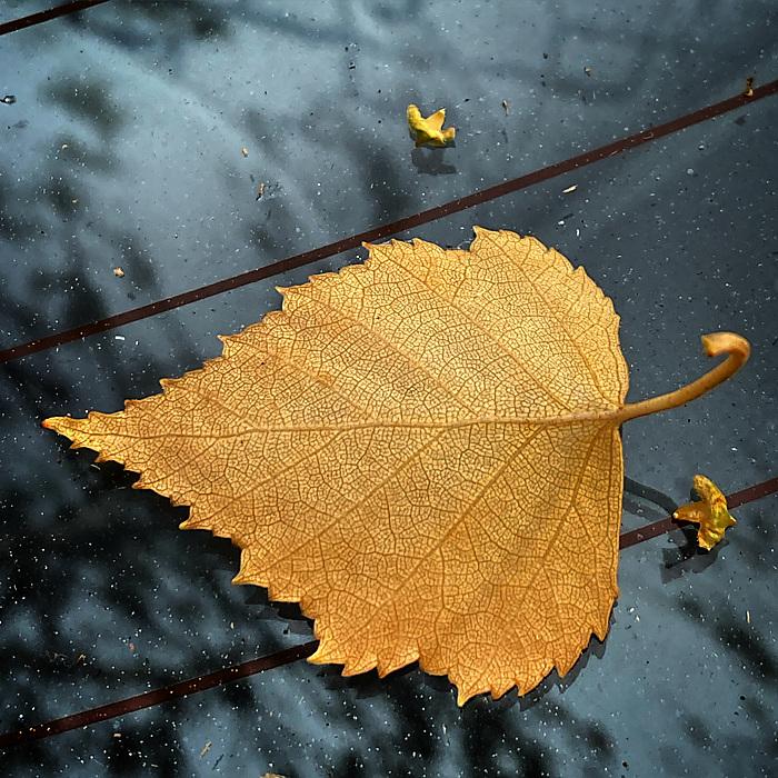 photoblog image Fall